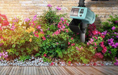 7 הדיברות לגינה ירוקה ופורחת, אבל חסכונית במים