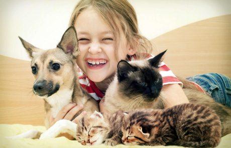 מיצי? לאסי? מה עדיף לאמץ כלב או חתול